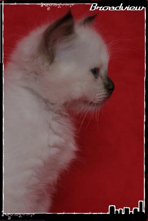 Les bébés de Foxy et Pepper - Page 2 2012_07_27_joe7-36bf2ed